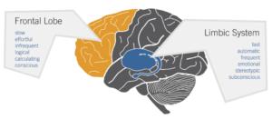 croquis d'un cerveau
