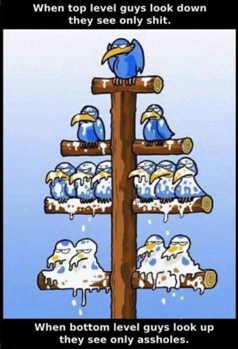 Plusieurs oiseaux bleus posés sur des branches. Plus ils sont bas plus ils sont recouverts de fientes.